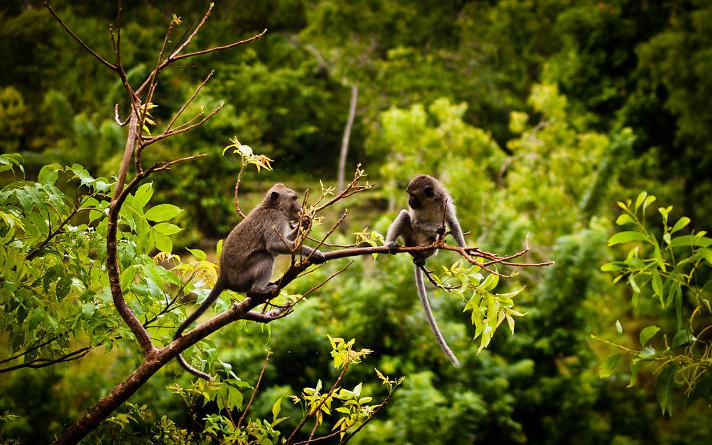 Monkey Island, Padang Padang -Bali